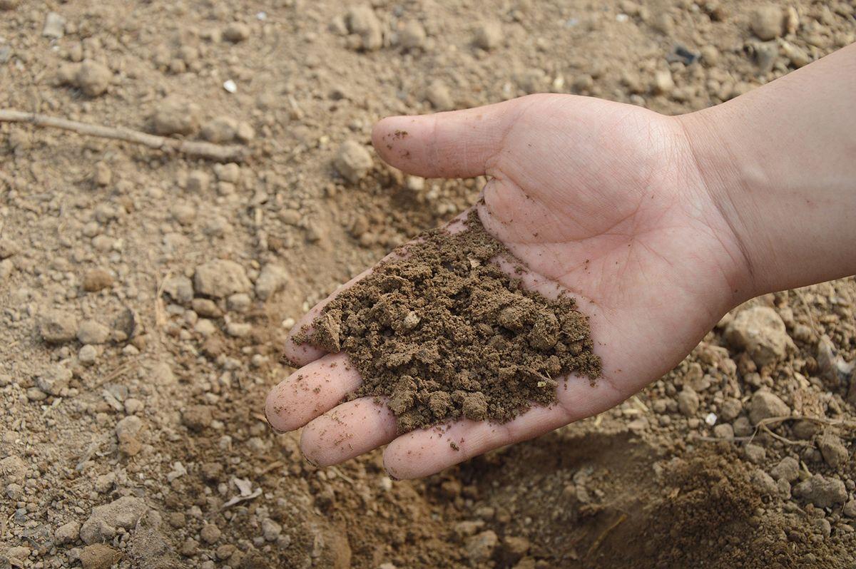 fertilizantes ecológicos mejoran la calidad del suelo y de los cultivos